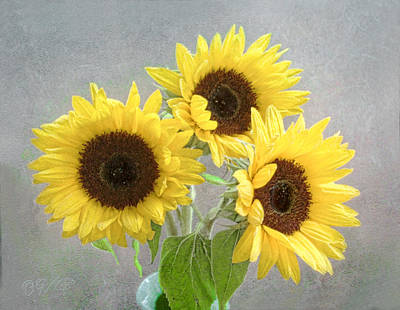 Photograph - Sunflower Trio by Louise Kumpf