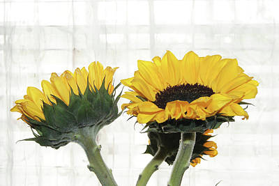 Photograph - Sunflower Trio by Margie Avellino