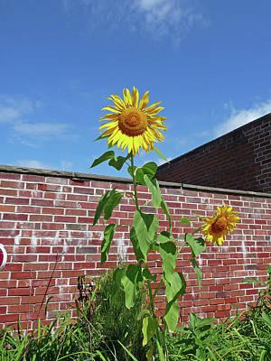 Sunflower Under Blue Skies Art Print by Margie Avellino