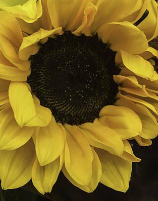 Sunflower Up Close Art Print by Arlene Carmel