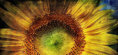 Photograph - Sunflower by Vittorio Chiampan