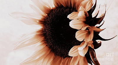 Photograph - Sunflower - Waiting For You by Janine Riley