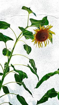 Photograph - Sunflower Wall 1 by Rob Hans