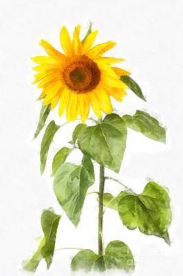 Digital Art - Sunflower Watercolor by Edward Fielding