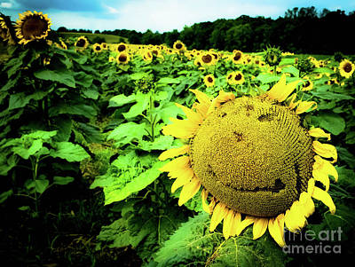 Sunflower With A Smiley Face Art Print by Jennifer Craft