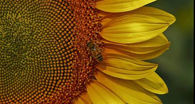 Sunflower With Bee Original by Jon Cretarolo