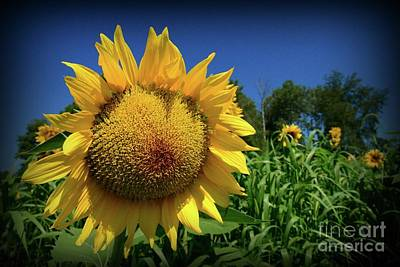 Sunflower With Blue Sky Art Print