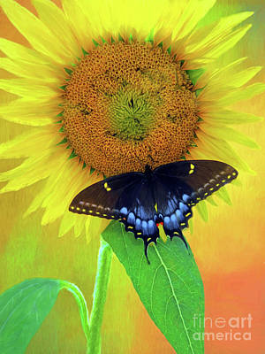 Photograph - Sunflower With Company by Marion Johnson