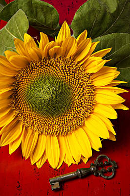 Photograph - Sunflower With Old Key by Garry Gay