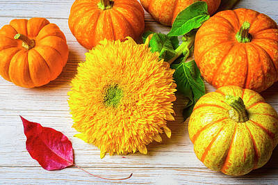 Photograph - Sunflower With Small Pumpkins by Garry Gay