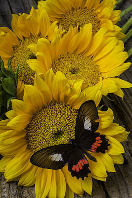 Sunflower With Wonderful Butterfly Art Print by Garry Gay