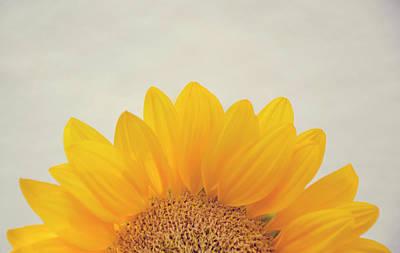 Animal Surreal - Sunflower2 by Yenny Camacho