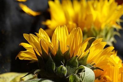 sunflowerING Original
