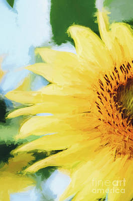 Photograph - Sunflowers 15 by Andrea Anderegg