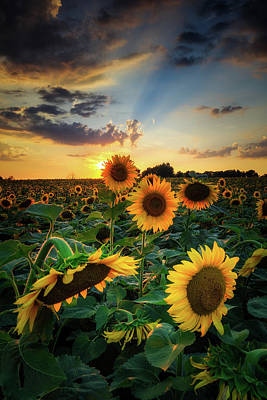 Photograph - Sunflowers 2 by Emmanuel Panagiotakis