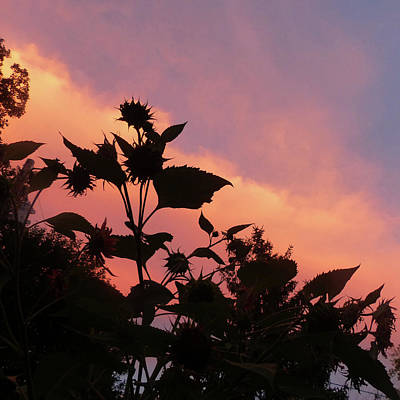 Photograph - Sunflowers Against A Pink Sky by Rosanne Licciardi