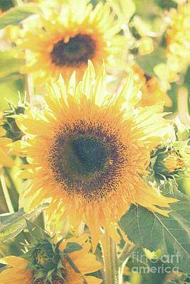 Fields Of Flowers Photograph - Sunflowers   by Ana V Ramirez