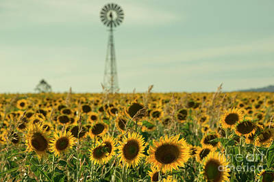 Photograph - Sunflowers And A Windmill In A Field by Rob D