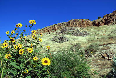 Photograph - Sunflowers And Cliffs by George Jones