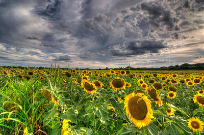 Photograph - Sunflowers And Clouds by Steve Stuller