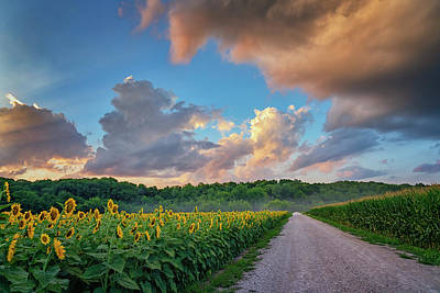 Photograph - Sunflowers And Corn Sunset Weldon Spring Mo Grk8321_07152018-hdr  by Greg Kluempers