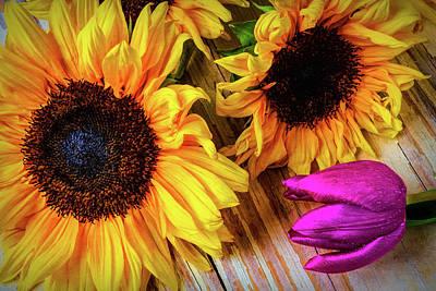 Sunflowers And Purple Tulip Art Print