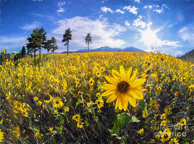 Photograph - Sunflowers At Sunset Crater by Marianne Jensen