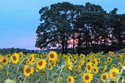 Fruits And Vegetables Still Life - Sunflowers at Sunset by Mary Ann Artz