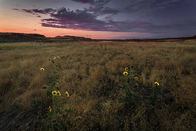Photograph - Sunflowers At Sunset by Rick Strobaugh