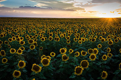 Sunflowers At Sunset Art Print