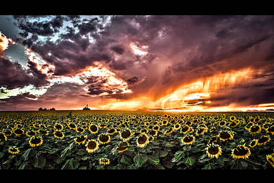 Photograph - Sunflowers At Sunset by Vic Bouchard