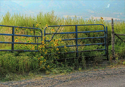 Photograph - Sunflowers At The Gate by David King