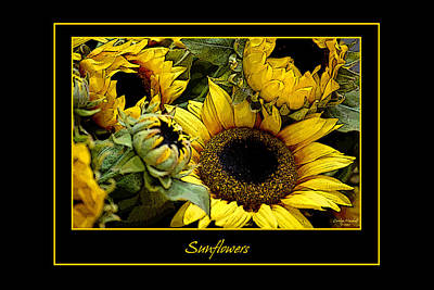 Black Background Mixed Media - Sunflowers by Carolyn Marshall