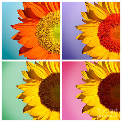 Yellow Sunflowers Photograph - Sunflowers Collage by Mark Ashkenazi