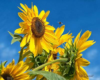 Photograph - Sunflowers by CR  Courson