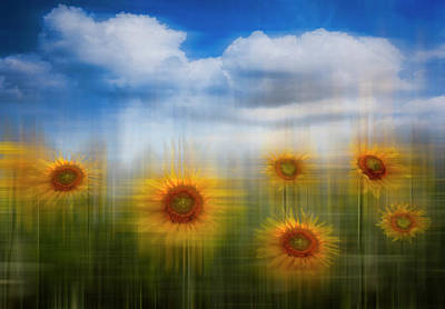 Photograph - Sunflowers Dreamscape by Debra and Dave Vanderlaan