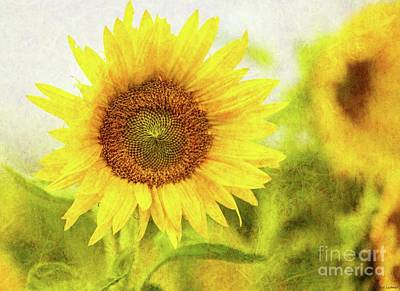 Photograph - Sunflowers by Eva Lechner