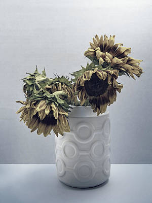 Silver Turquoise Photograph - Sunflowers Fading Away by William Dey