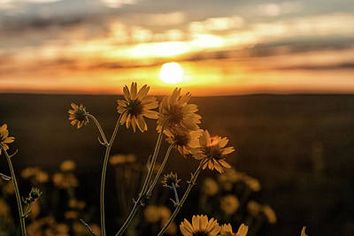 Photograph - Sunflowers Greet The Rising Sun by Tony Hake