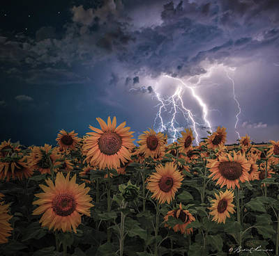 Sunflowers In Adversity Art Print by Brent Shavnore