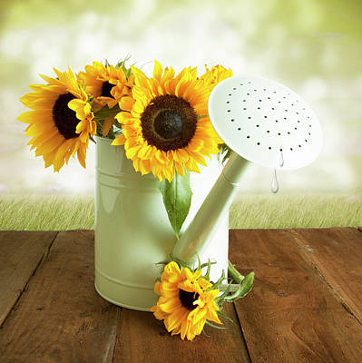 Photograph - Sunflowers In An Old Watering Can by Ethiriel Photography
