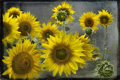 Photograph - Sunflowers In Michigan by Evie Carrier