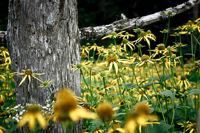 Photograph - Sunflowers In North Carolina 2 by Jonathan Hansen