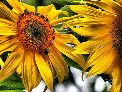 Photograph - Sunflowers In Stereo by RLH Photography