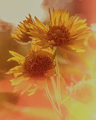 Photograph - Sunflowers In The Morning by Garry McMichael