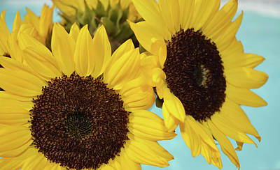Floral Photograph - Sunflowers In The Sky by Aimee L Maher Photography and Art Visit ALMGallerydotcom