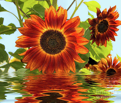 Photograph - Sunflowers In Water by Mimi Ditchie