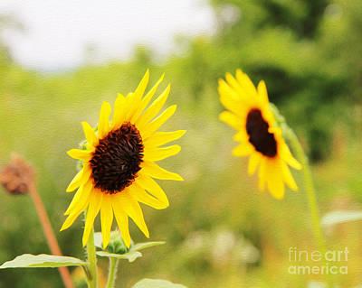 Digital Art - Sunflowers by Joseph Re