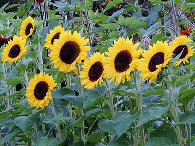 Photograph - Sunflowers by Lisa Gilliam