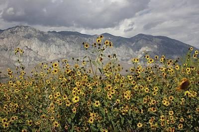 Photograph - Sunflowers Lone Pine by Cheryl Dean
